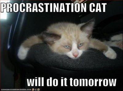 Procrastination cat