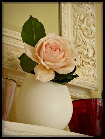 Shropshire lad cut rose