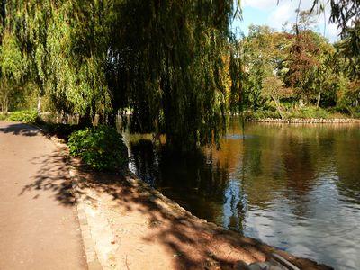 Lake in sun