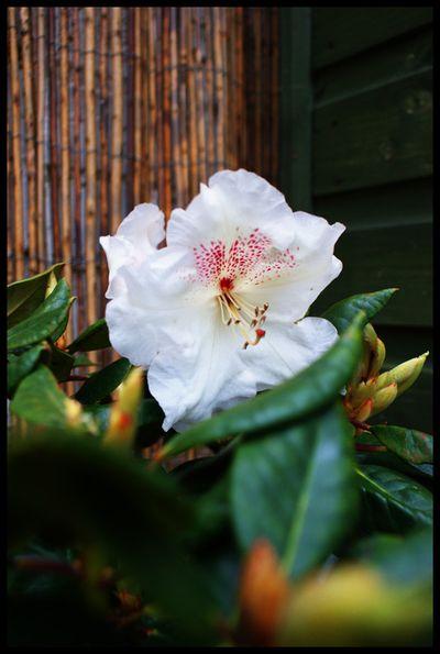 EditedGarden in bloom 1