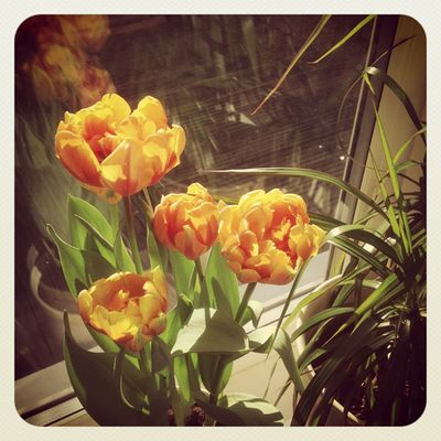 Tulips and sun_sm