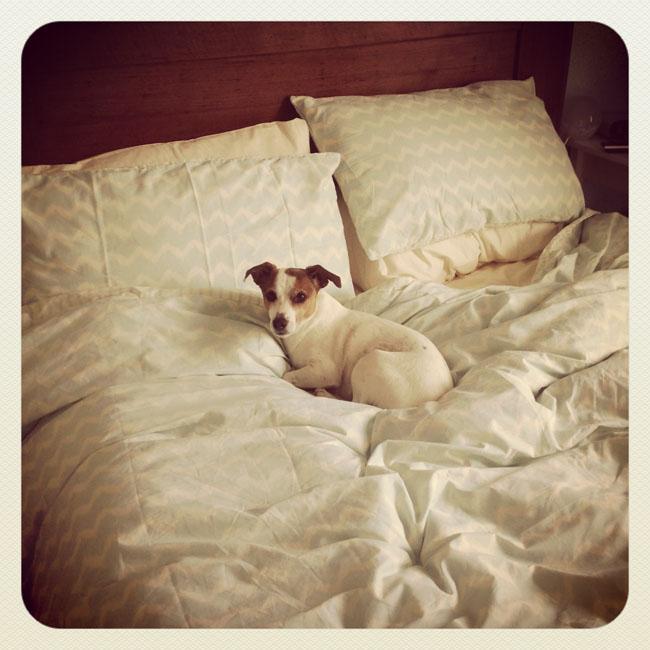 Bed hogger_sm