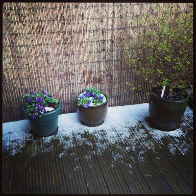 April showers_sm