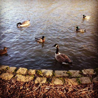 Weather for ducks_sm