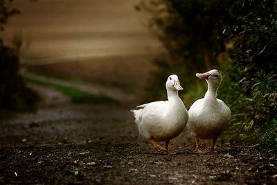 2014-16-01 - duck conversations