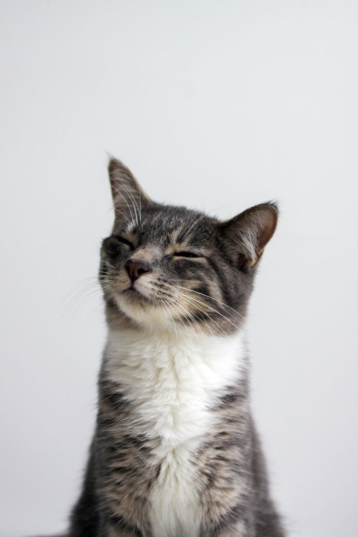 2014-02-13 - happy cat