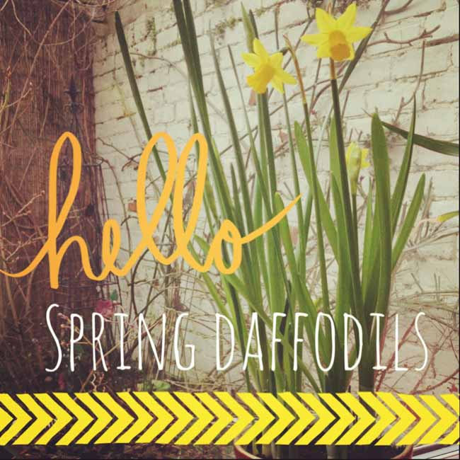 Hellow spring dafs 2_sm