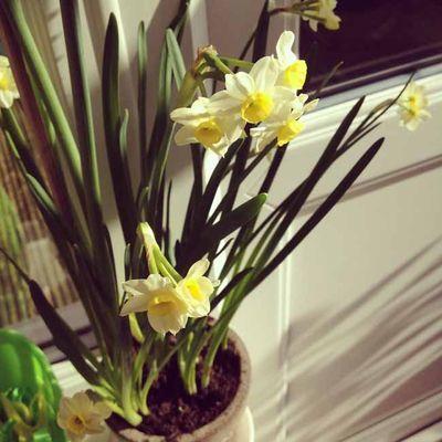 Spring sun_sm