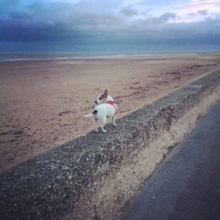 Windswept beaches_sm