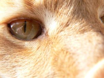 Monty_close_up
